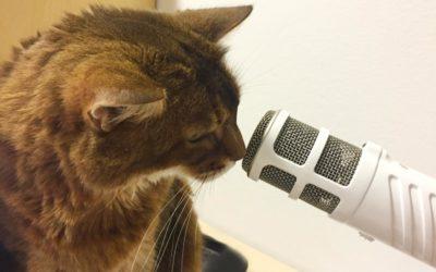 100 Folgen Katzen-Podcast – das Jubiläum