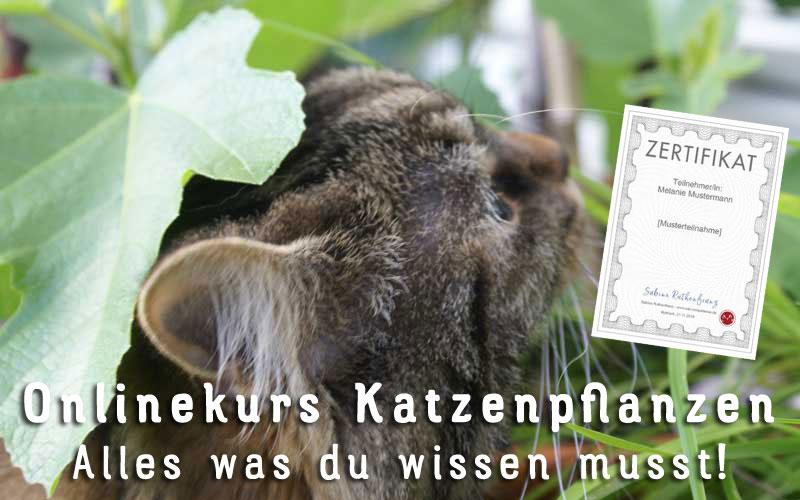 Katzenpflanzentipps - Pflanzentipps für Katzen