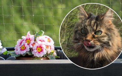 Sind Primeln für Katzen giftig?