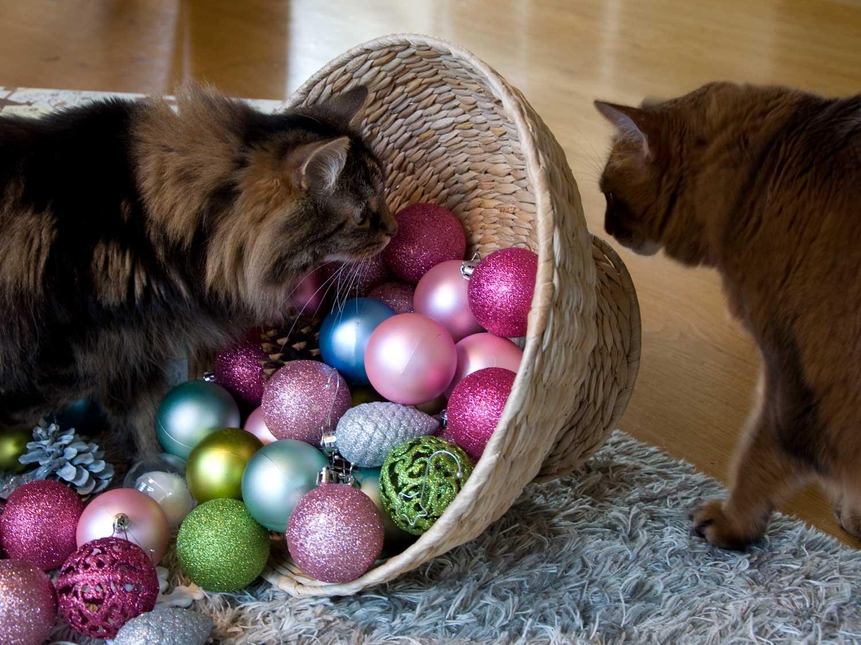 Meine Katzen Dolly und Pauli im Weihnachtsfieber