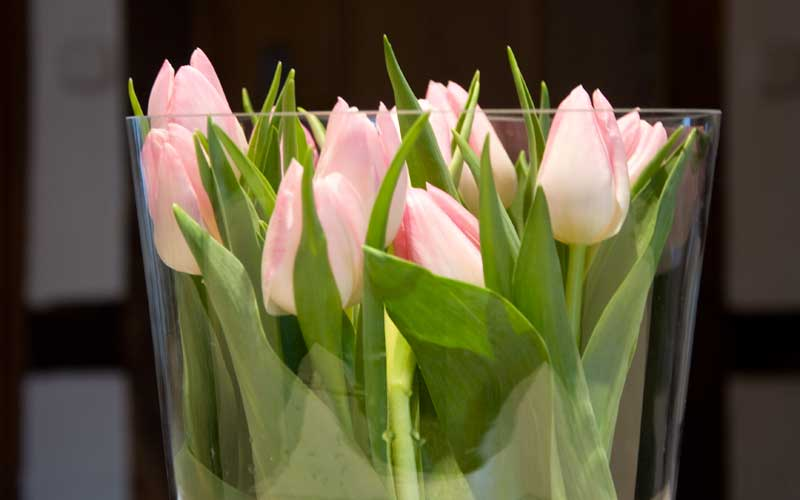 Schnittblumen in der Vase