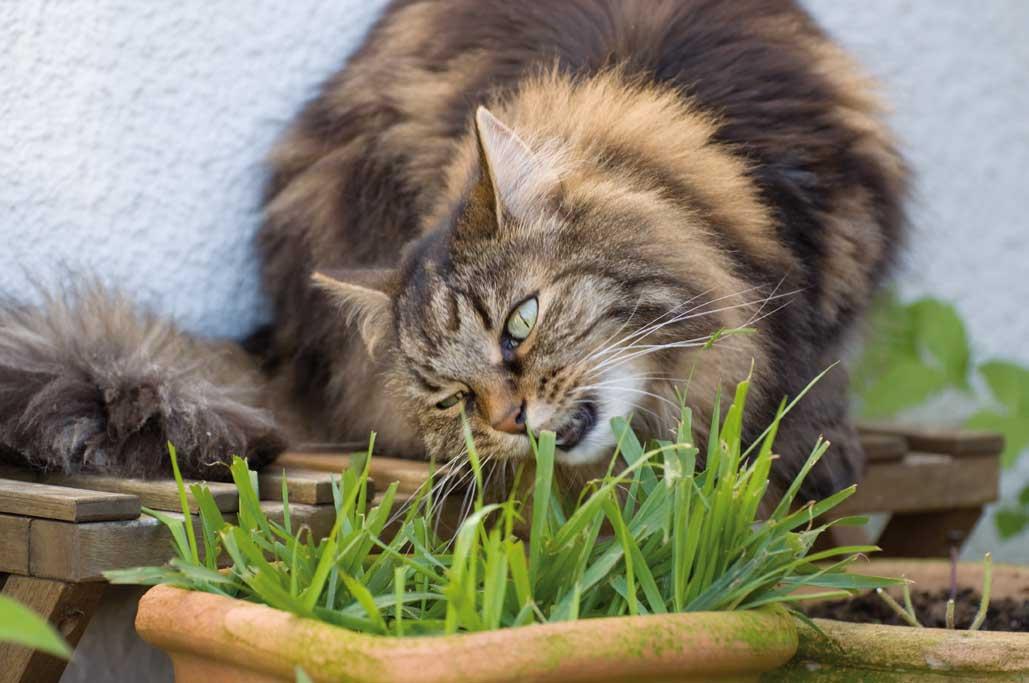 Dolly knabbert am Katzengras