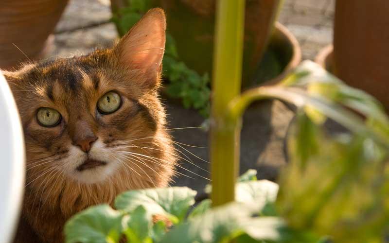Für Katzen geeignete Pflanzen zu finden ist gar nicht so einfach.