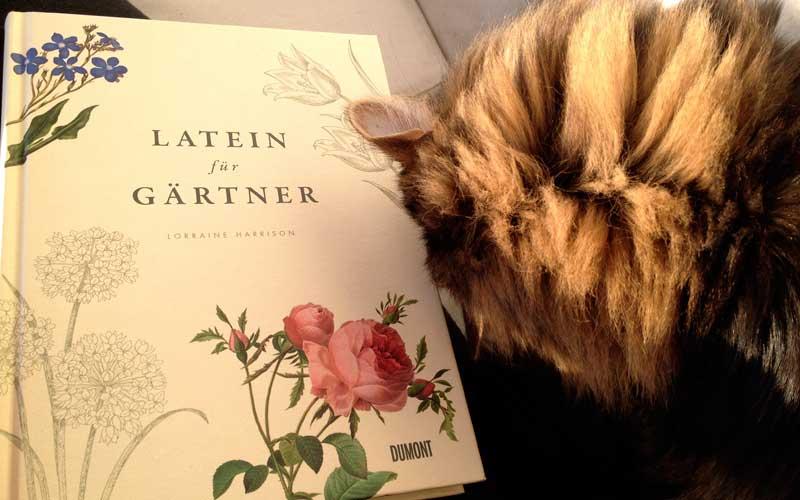 Katzen und Pflanzen können eine gefährliche Kombination sein.