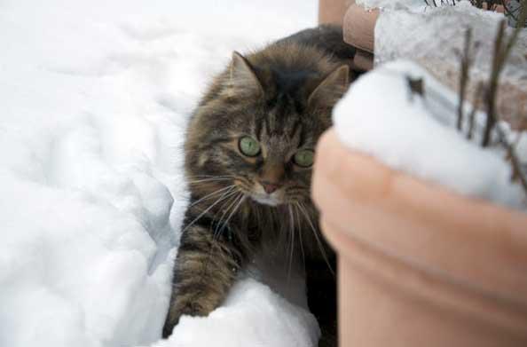 Dolly im Schnee