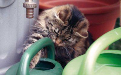 Pflanzengefahren für Katzen