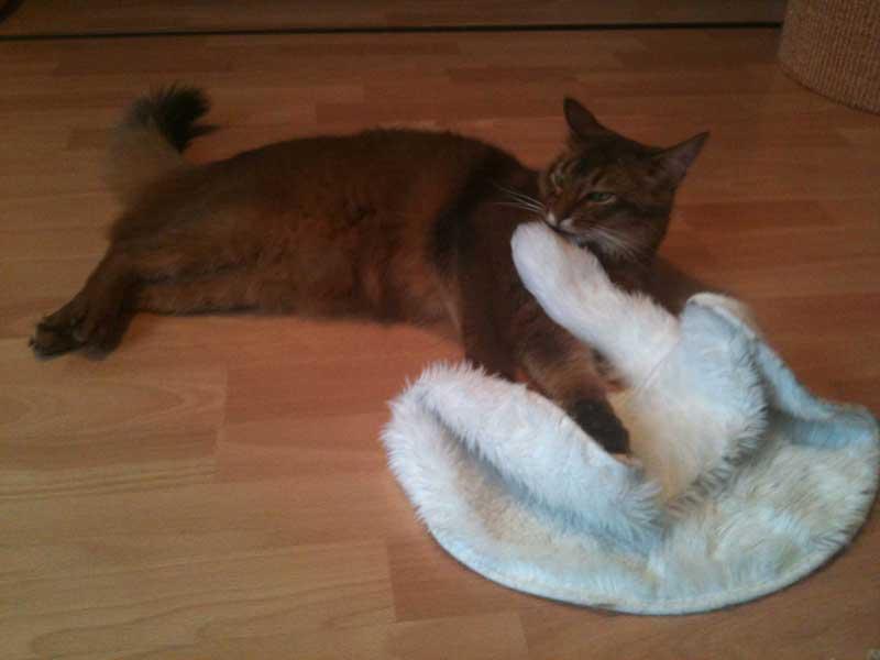 Lieblingsdecke aus der alten Ikea Katzenkollektion