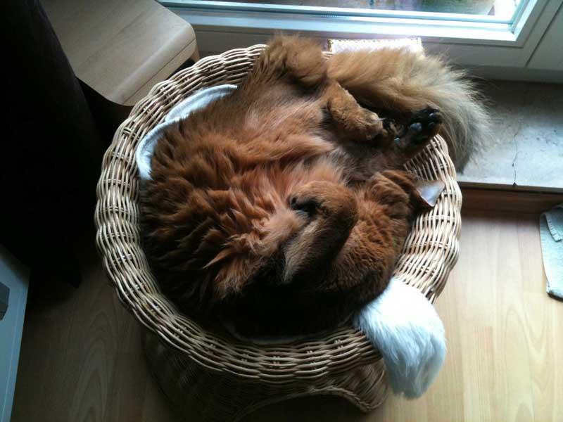 Wir freuen uns auf die neue Ikea Katzenkollektion!
