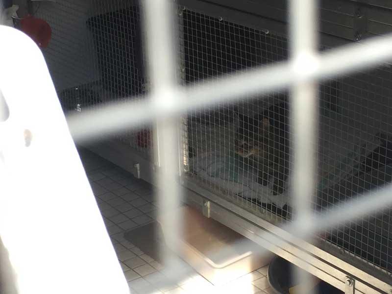 """Blick in die Quarantänestation: Das ist die wunderschöne Baumkatze, die eine Woche bei schlimmstem Wetter auf einem Baum verbringen musste, bis sie endlich gerettet werden konnte. Die Hintergründe dazu erfahrt ihr in einer weitere """"Katzen-Podcast unterwegs""""-Folge :-)"""