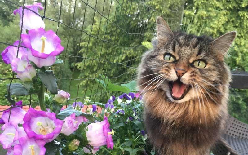 Der Katzen-Blog von und mit Sabine, Dolly & Pauli