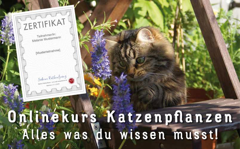 Onlinekurs Katzenpflanzen - Jetzt mehr erfahren!