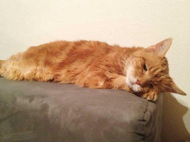 Unser Kater Tiger als alte Katze, kurz vor seinem Tod.