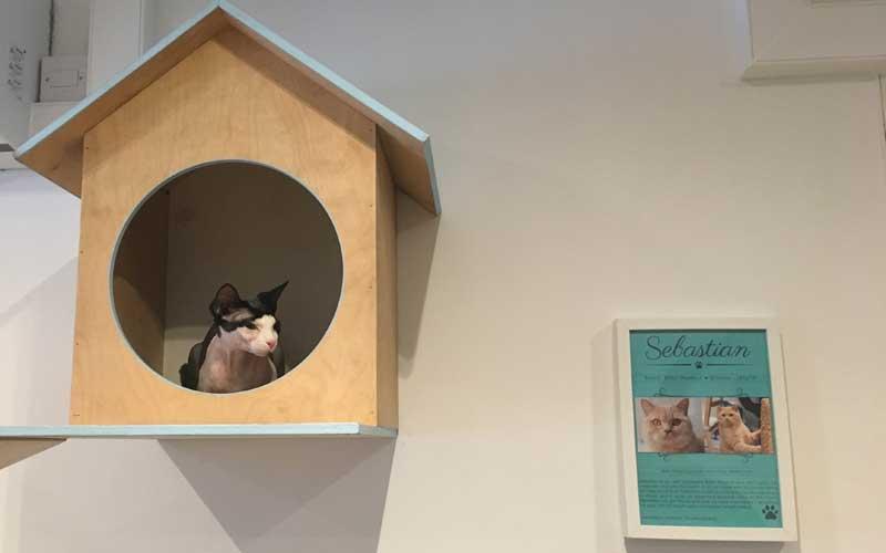 Elodie im Katzencafé Edinburgh. So wurden wir begrüßt.