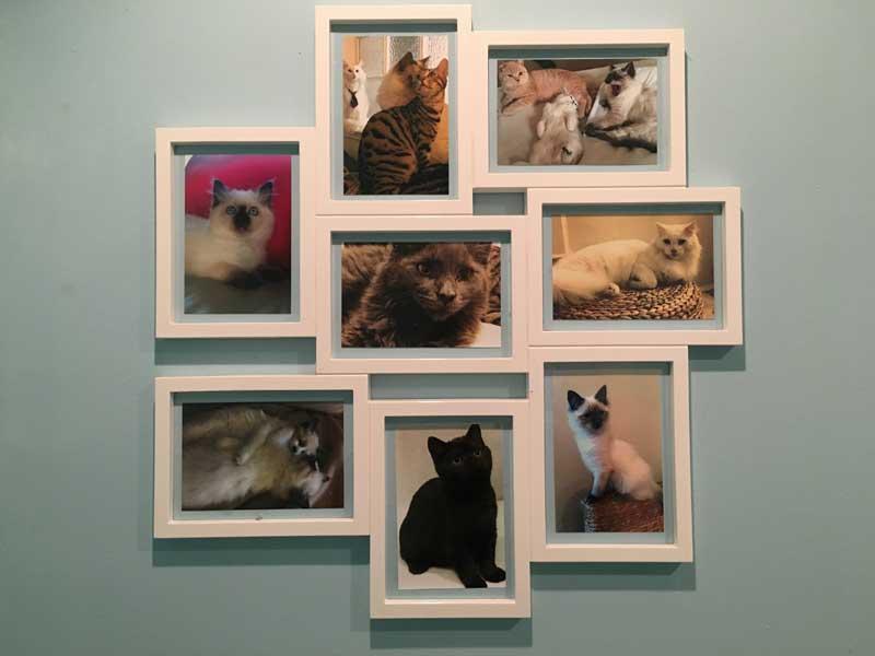 Kleine Familienausstellung auf der Menschentoilette im Katzencafé Edinburgh