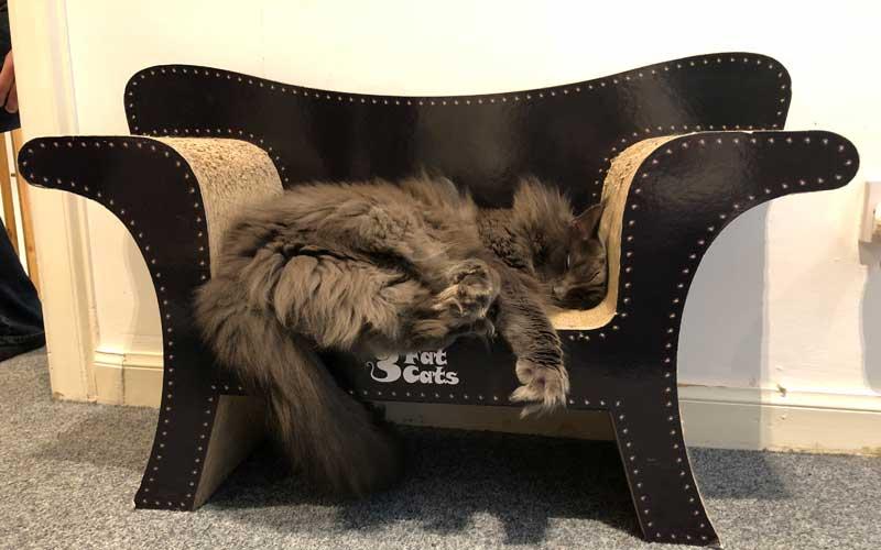 Dicke Tatzen im Katzencafé Edinburgh