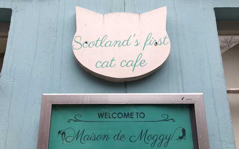Maison de Moggy - Katzencafé Edinburgh