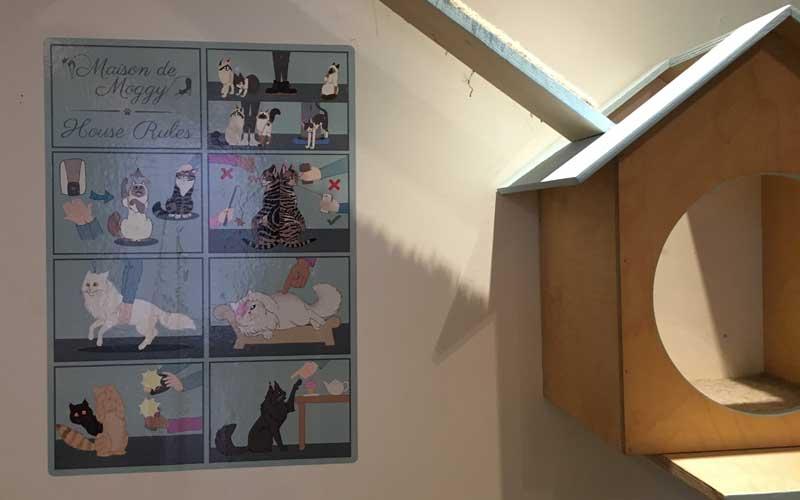 Anleitung für Besucher im Katzencafé Maison de Moggy
