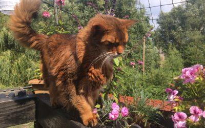 Wichtiger Hinweis zum Thema Katzenpflanzen