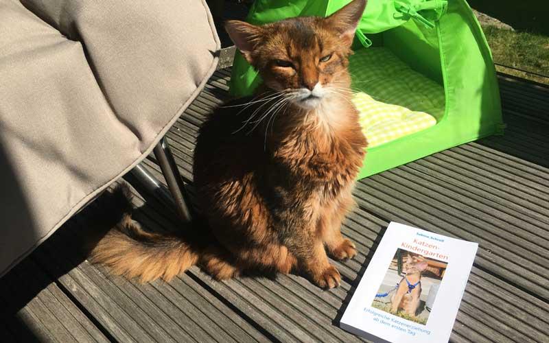 Pauli und das Buch Katzenkindergarten