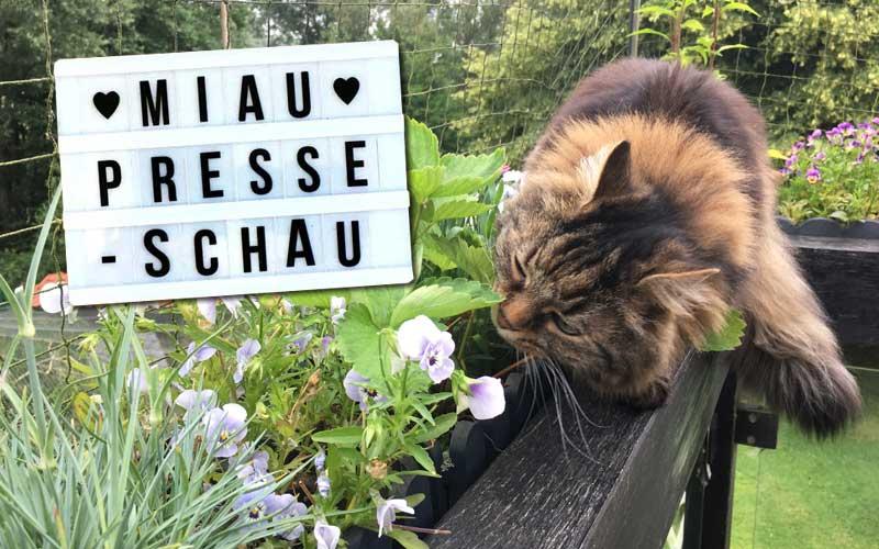 Giftige Pflanzen im Katzenhaushalt