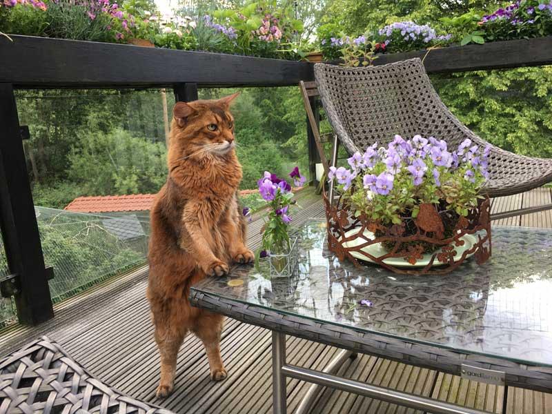 Bewegung und Beweglichkeit der Katze