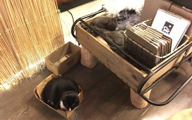 Fröhliche Katzen im Katzencafé von Helsinki