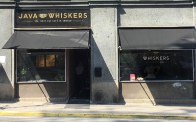 Java Whiskers / Stockholm