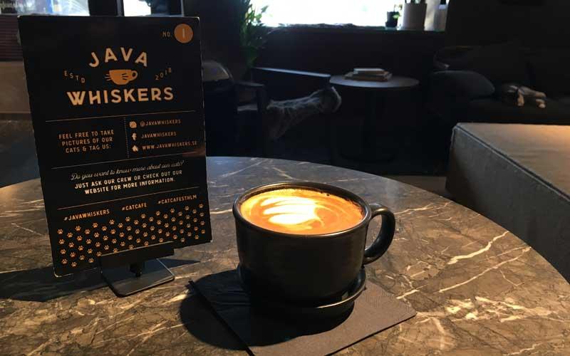 Mein Tipp: Super guter Cappuccino!