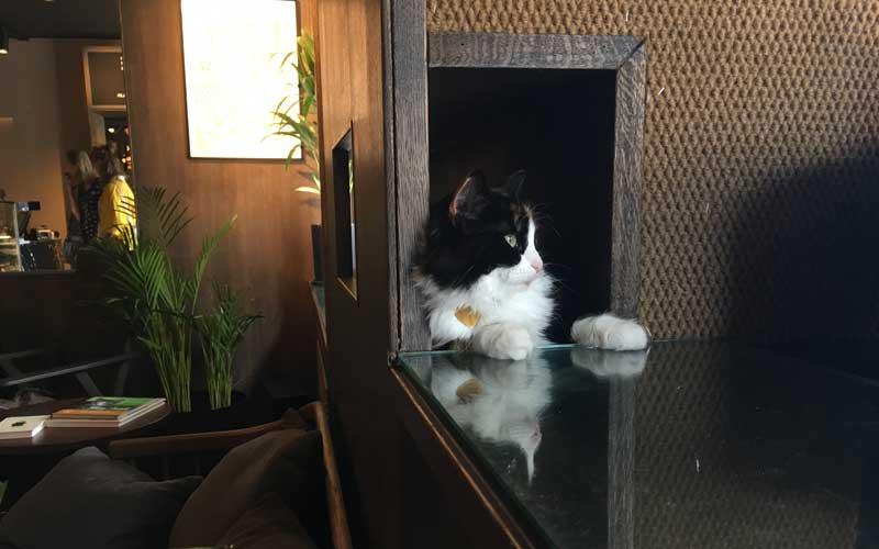 Am Fenster gibt es einen ganz besonderen Sitzplatz für die Katzen.