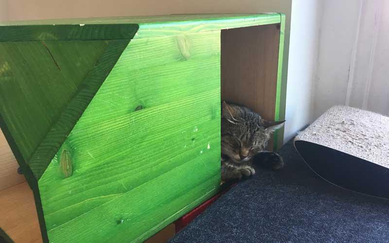 Individuelle Katzenmöbel
