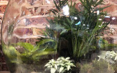 Pflanzen im Glas – schön & sicher