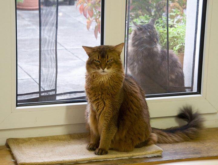 Katzenzusammenführung – zweite Katze ja oder nein?