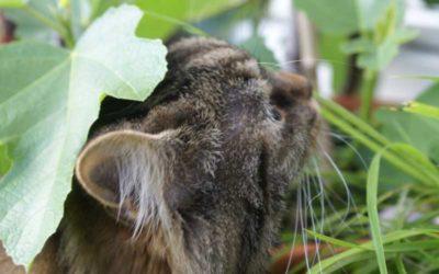 Pflanzentipps für Katzen