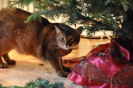 Weihnachtsbaumständer katzensicher