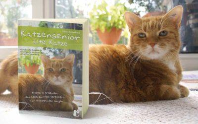 Katzensenior – alte Katze