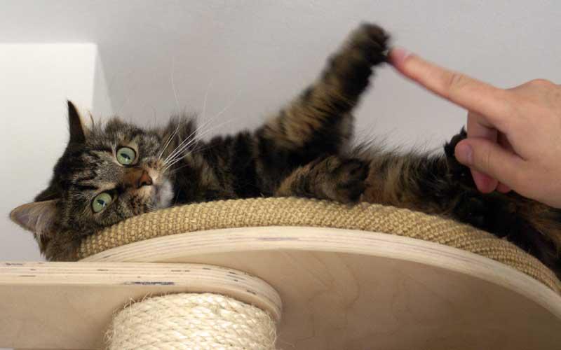 Lerne im Katzenhaltercoaching wie du deine Katze erziehst