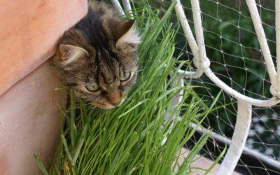 Katzengras – ja oder nein?