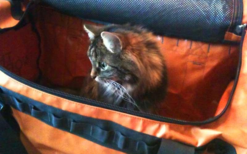 Urlaub mit Katze - Dolly testet die Reisetasche