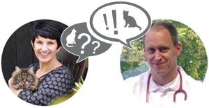 Katze vermisst? Interview mit Tierarzt Dr. Streicher