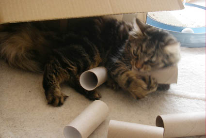 Katzenspiel - Kartonburg