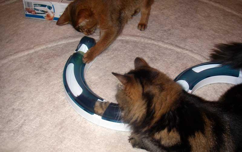 Katzenspiel - Catit Spielschiene