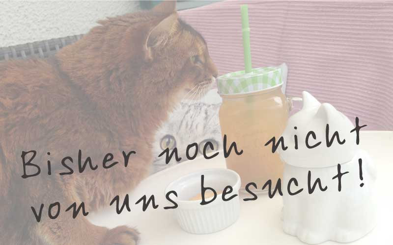 Cat'n Coffee / Klagenfurt