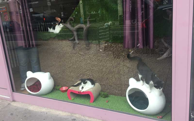 Katzencafé London