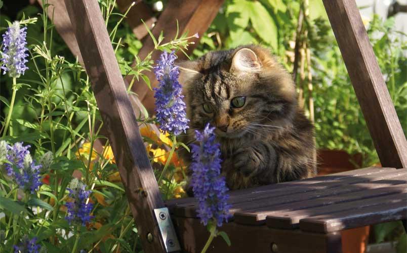 katzenpflanzen f r katzen geeignete pflanzen sorgen f r. Black Bedroom Furniture Sets. Home Design Ideas