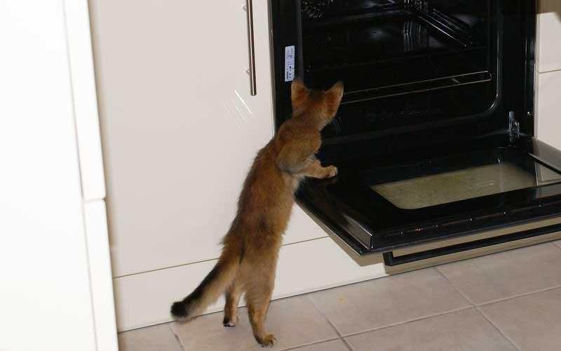 Sicherheitscheck – Gefahren für Katzen