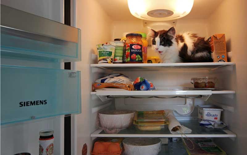 Gefahr für Katzen - giftige Lebensmittel