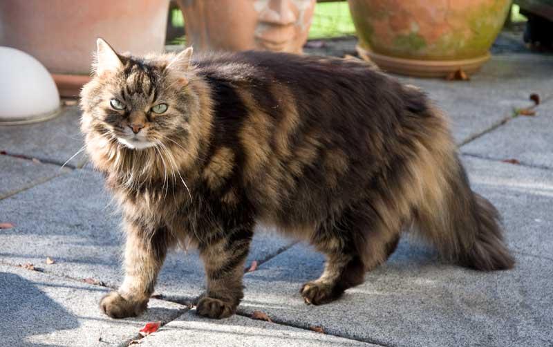 Permethrin - Gefahr für Katzen
