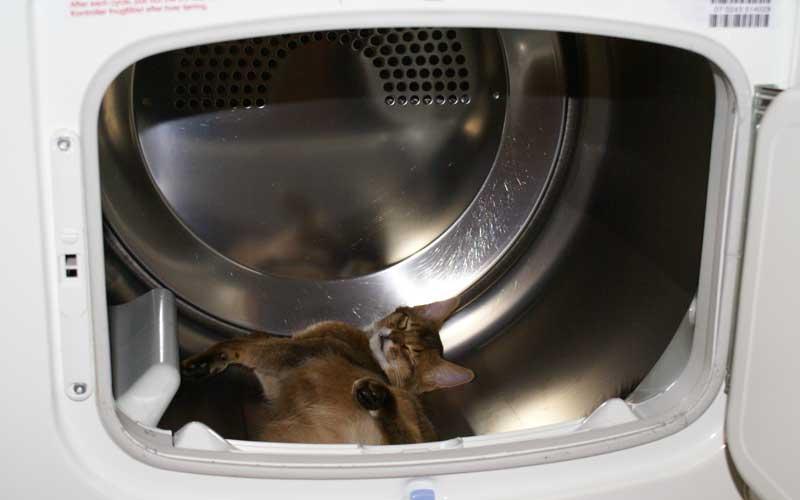 Gefahr für Katzen - der Trockner