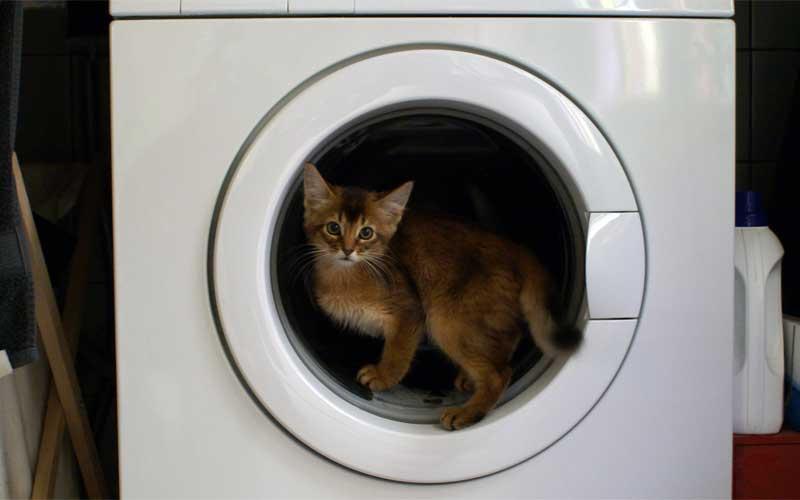 Die Waschmaschine gehört zu den klassischen Gefahren im Katzenhaushalt