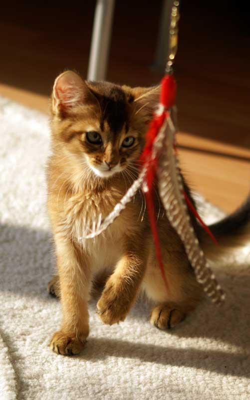 Katzenspielzeug - DaBird